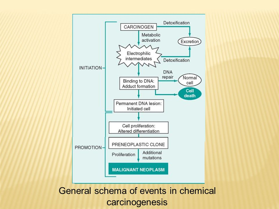 General schema of events in chemical carcinogenesis