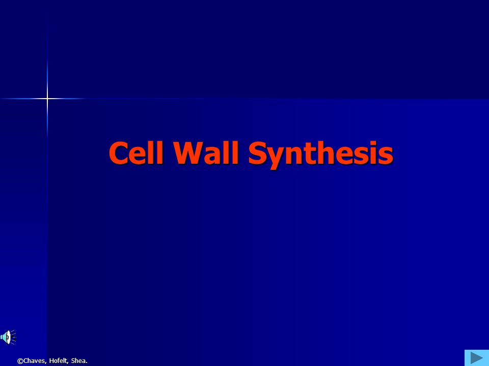 ©Chaves, Hofelt, Shea. Cell Wall Synthesis