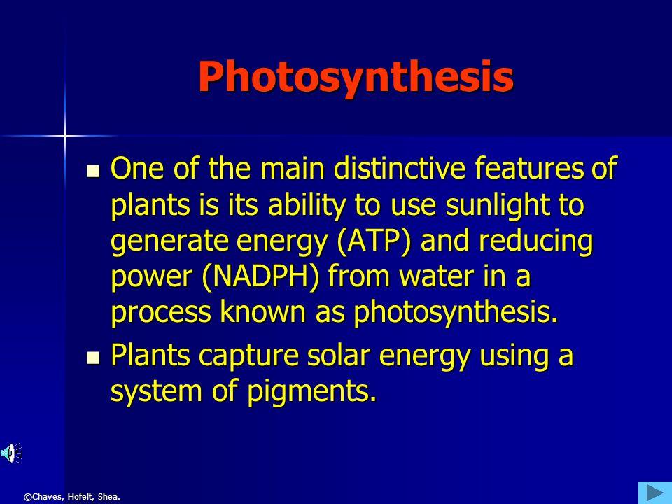 ©Chaves, Hofelt, Shea. Photosynthesis