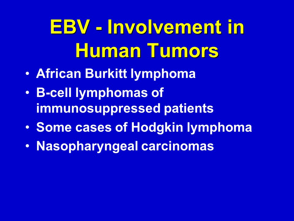 EBV - Involvement in Human Tumors African Burkitt lymphoma B-cell lymphomas of immunosuppressed patients Some cases of Hodgkin lymphoma Nasopharyngeal carcinomas