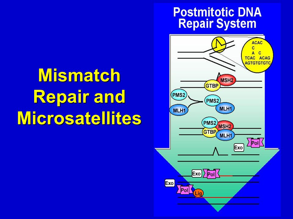 Mismatch Repair and Microsatellites