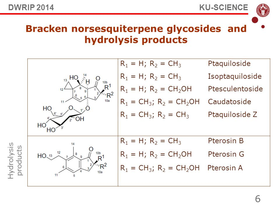 6 Bracken norsesquiterpene glycosides and hydrolysis products R 1 = H; R 2 = CH 3 Ptaquiloside R 1 = H; R 2 = CH 3 Isoptaquiloside R 1 = H; R 2 = CH 2 OH Ptesculentoside R 1 = CH 3 ; R 2 = CH 2 OHCaudatoside R 1 = CH 3 ; R 2 = CH 3 Ptaquiloside Z R 1 = H; R 2 = CH 3 Pterosin B R 1 = H; R 2 = CH 2 OH Pterosin G R 1 = CH 3 ; R 2 = CH 2 OH Pterosin A Hydrolysis products DWRIP 2014 KU-SCIENCE