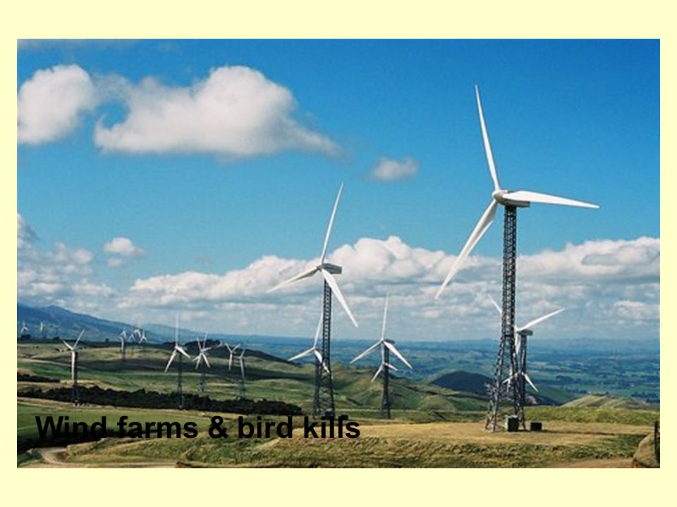Wind farms & bird kills