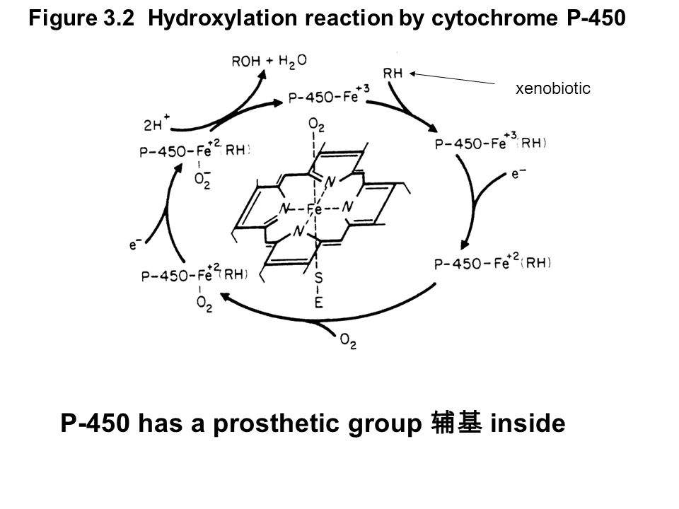 The single-electron transfer is achieved by coupling cytochrome P-450 with another enzyme called cytochrome P-450 reductase, which has 2 prosthetic groups.
