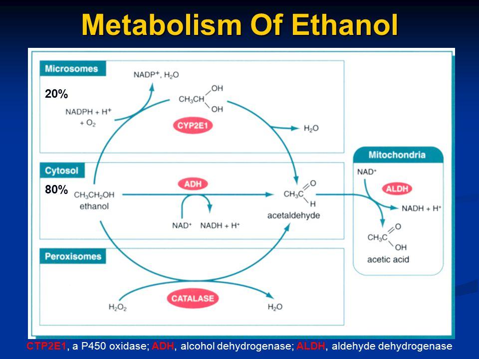 Metabolism Of Ethanol CTP2E1, a P450 oxidase; ADH, alcohol dehydrogenase; ALDH, aldehyde dehydrogenase 20% 80%