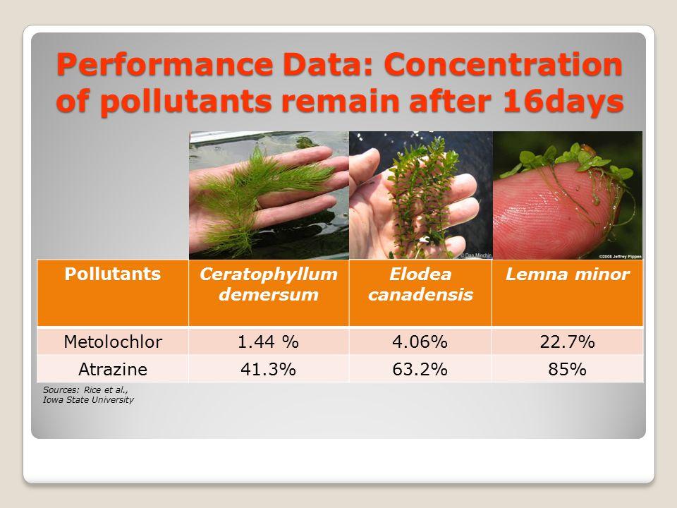 Performance Data: Concentration of pollutants remain after 16days PollutantsCeratophyllum demersum Elodea canadensis Lemna minor Metolochlor1.44 %4.06