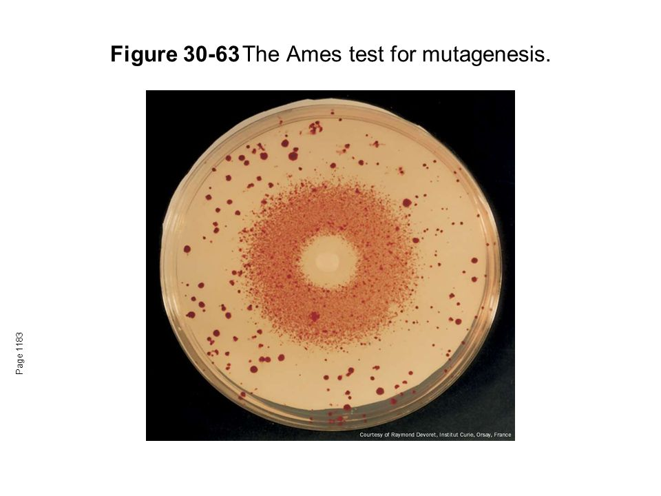 Figure 30-63The Ames test for mutagenesis. Page 1183