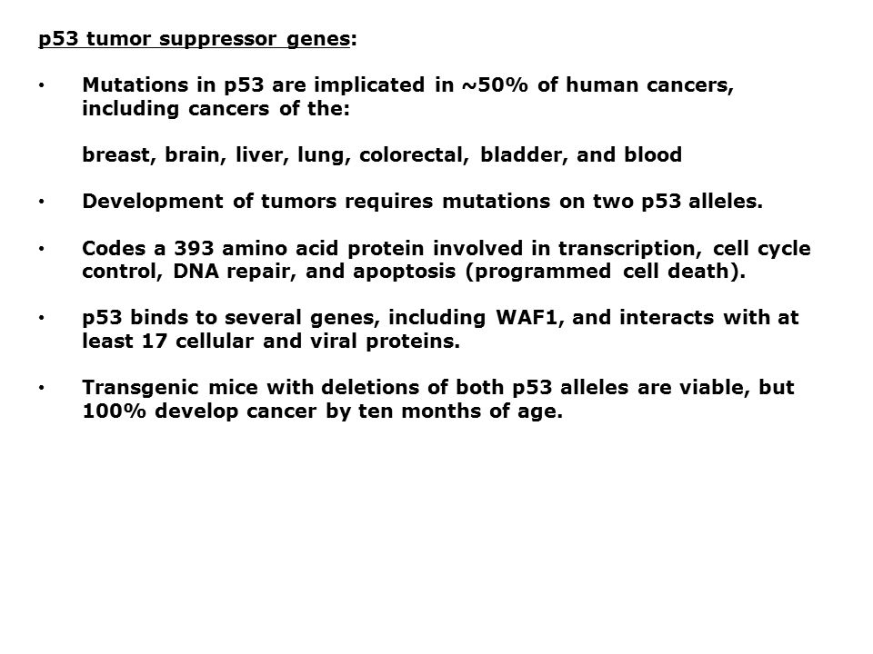 p53 tumor suppressor genes: Mutations in p53 are implicated in ~50% of human cancers, including cancers of the: breast, brain, liver, lung, colorectal