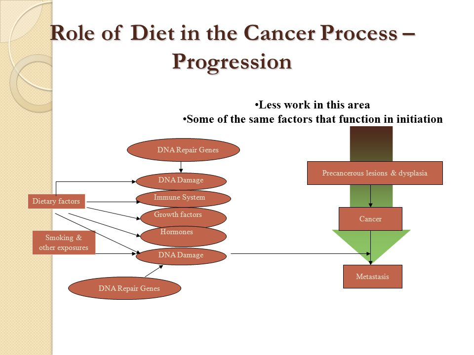 DNA Repair Genes DNA Damage Immune System Growth factors Hormones Dietary factors DNA Damage Smoking & other exposures DNA Repair Genes Precancerous lesions & dysplasia Cancer Metastasis Less work in this area Some of the same factors that function in initiation Role of Diet in the Cancer Process – Progression