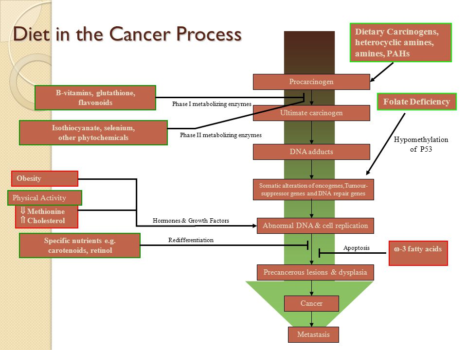 Diet in the Cancer Process Procarcinogen Ultimate carcinogen Precancerous lesions & dysplasia Cancer Metastasis Dietary Carcinogens, heterocyclic amines, amines, PAHs Somatic alteration of oncogenes,Tumour- suppressor genes and DNA repair genes DNA adducts Abnormal DNA & cell replication Isothiocyanate, selenium, other phytochemicals B-vitamins, glutathione, flavonoids Folate Deficiency Hypomethylation of P53 Obesity  Protein  Methionine  Cholesterol Specific nutrients e.g.