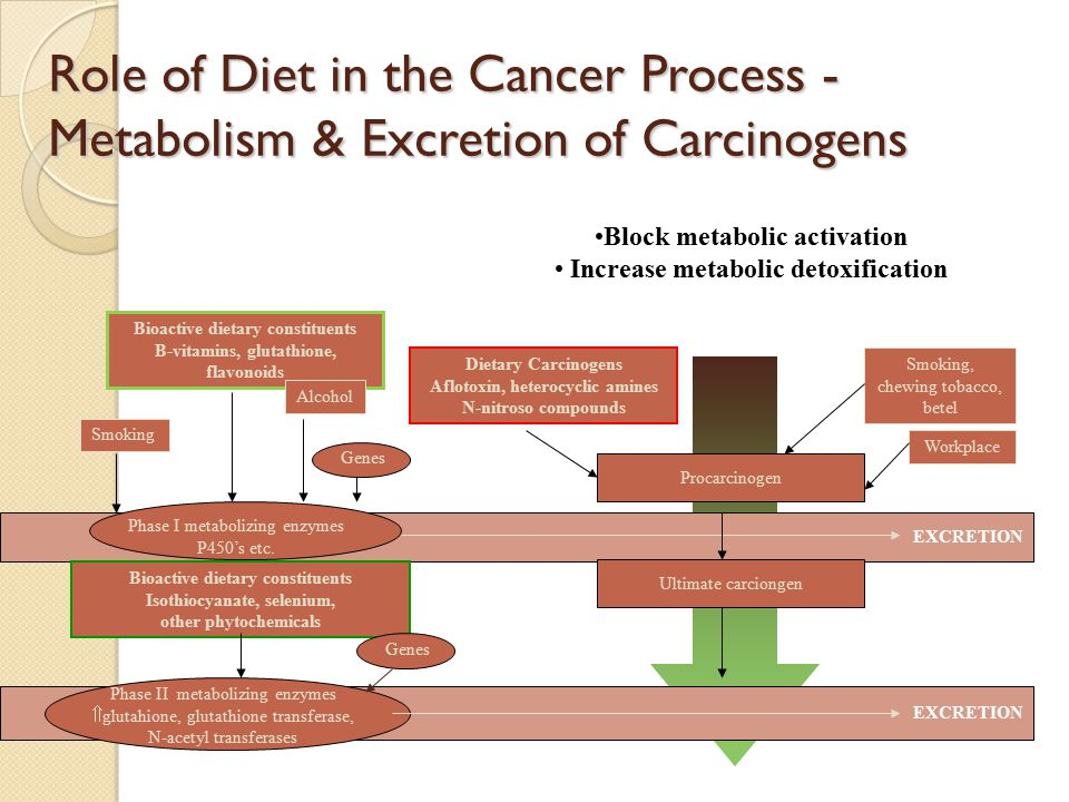 NORMAL DNA Physical Activity Energy Intake DNA Repair Genes Somatic alteration of oncogenes, Tumour-suppressor genes and DNA repair genes DNA adducts Folate Deficiency Inadequate Methyl groups Hypomethylation of P53 Role of Diet in the Cancer Process – Initiation PhiP Heterocyclic Amines