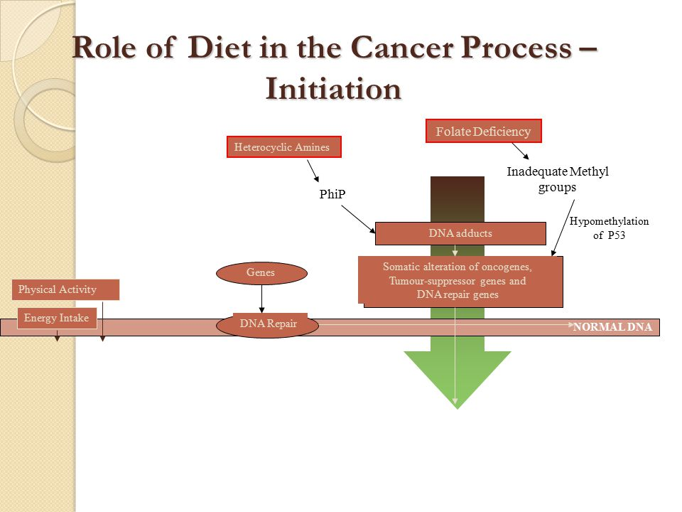 REDIFFERENTIATION APOPTOSIS Fibre Volatile fatty acids Colonic Bacteria  Physical Activity  Energy  Fat Obesity Dietary factors  Protein  Methionine  Cholesterol Hormones Growth factors Specific nutrients e.g.