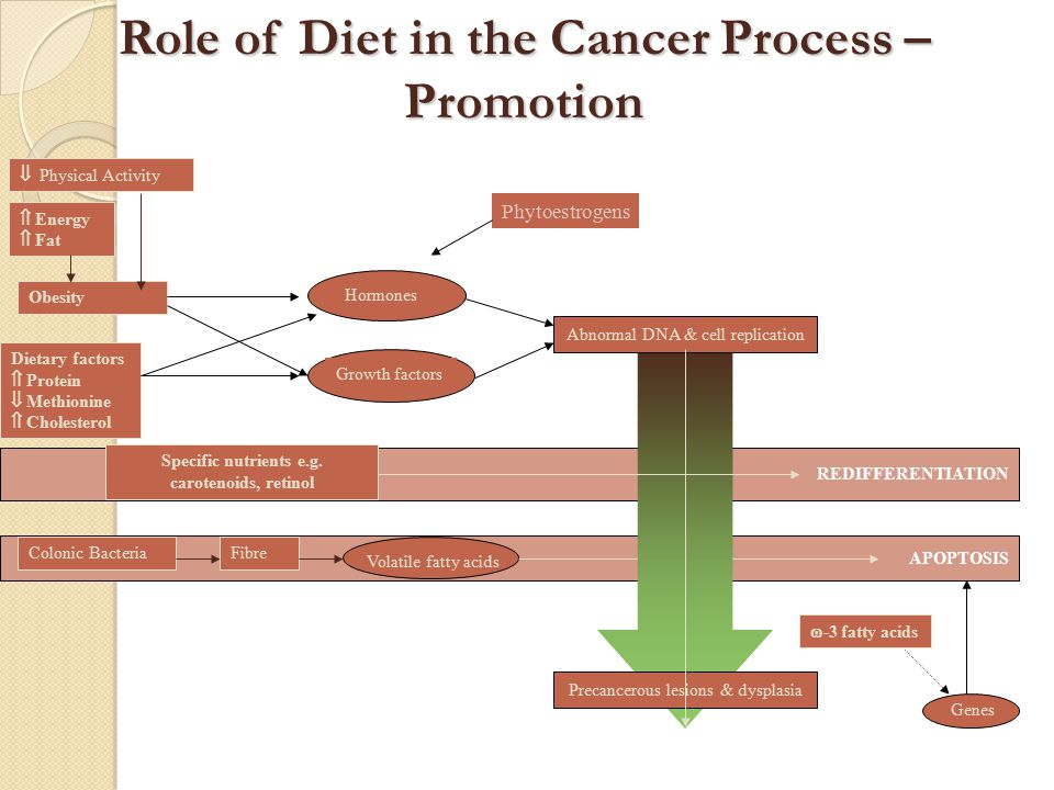 The Nutrition Study (1995-2000) Primary Aim: To determine if increased risk of breast cancer is associated with high consumption of fat and red meat, and low consumption of soy, and fruits and vegetables.