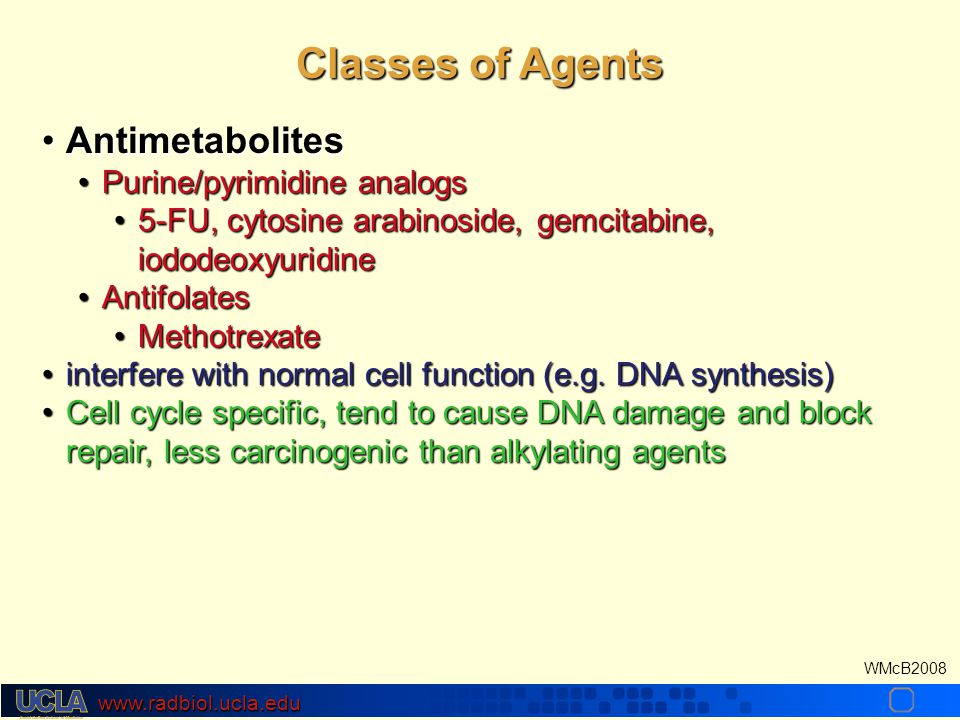 www.radbiol.ucla.edu WMcB2008 AntimetabolitesAntimetabolites Purine/pyrimidine analogsPurine/pyrimidine analogs 5-FU, cytosine arabinoside, gemcitabine, iododeoxyuridine5-FU, cytosine arabinoside, gemcitabine, iododeoxyuridine AntifolatesAntifolates MethotrexateMethotrexate interfere with normal cell function (e.g.