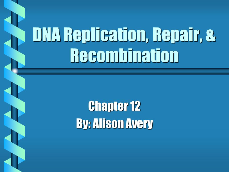 DNA Replication, Repair, & Recombination Chapter 12 By: Alison Avery