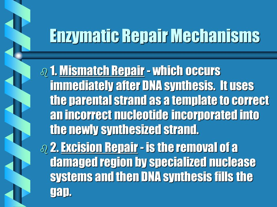 Enzymatic Repair Mechanisms b 1. Mismatch Repair - which occurs immediately after DNA synthesis. It uses the parental strand as a template to correct