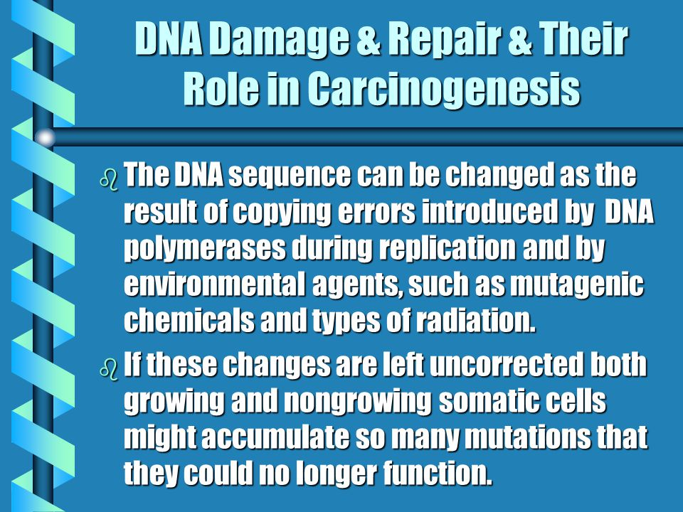 DNA Damage By Carcinogenesis b The actual relevance of DNA damage and repair became evident when it was discovered that all agents that cause cancer also cause a change in the DNA sequence and are considered mutagens.