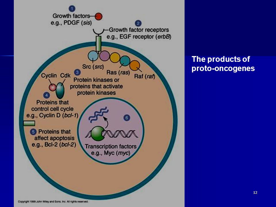 12 The products of proto-oncogenes