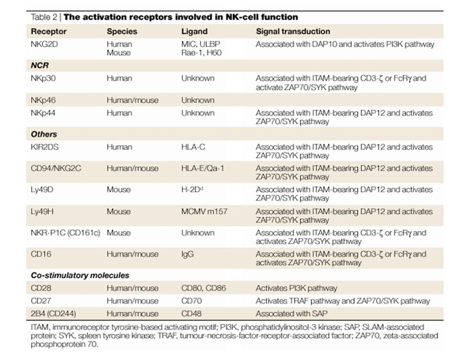 NKG2d human and mouse ligands RAE-1/H60 evidence: Tumors expressing RAE-1 or H60 are rejected, NK cell-dependent.