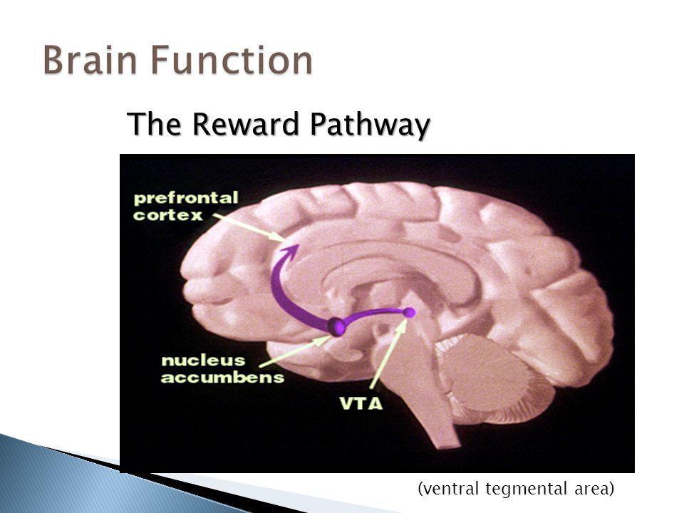 The Reward Pathway (ventral tegmental area)