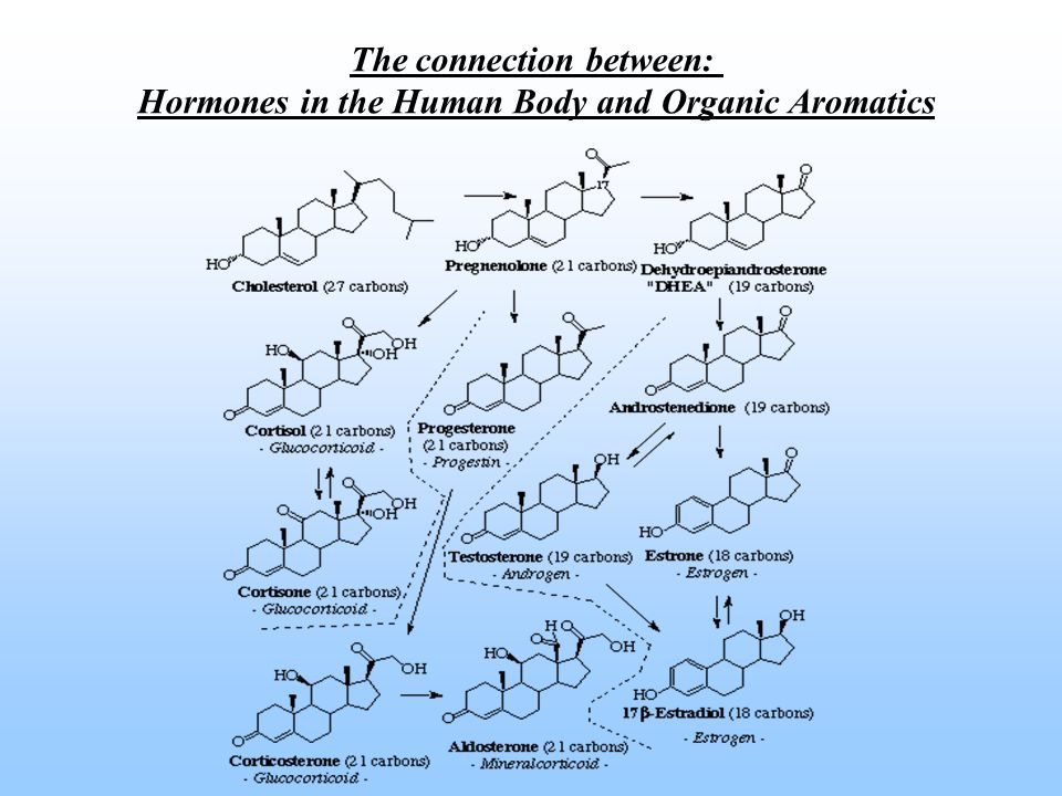 The connection between: Hormones in the Human Body and Organic Aromatics