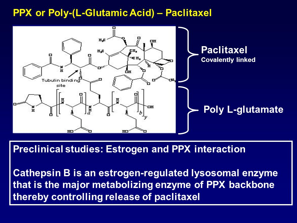 Preclinical studies: Estrogen and PPX interaction Cathepsin B is an estrogen-regulated lysosomal enzyme that is the major metabolizing enzyme of PPX backbone thereby controlling release of paclitaxel PPX or Poly-(L-Glutamic Acid) – Paclitaxel Paclitaxel Covalently linked Poly L-glutamate