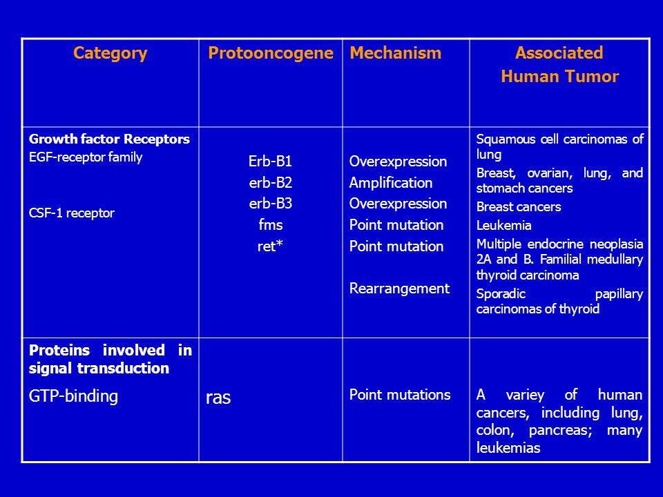 CategoryProtooncogeneMechanismAssociated Human Tumor Growth factor Receptors EGF-receptor family CSF-1 receptor Erb-B1 erb-B2 erb-B3 fms ret* Overexpr