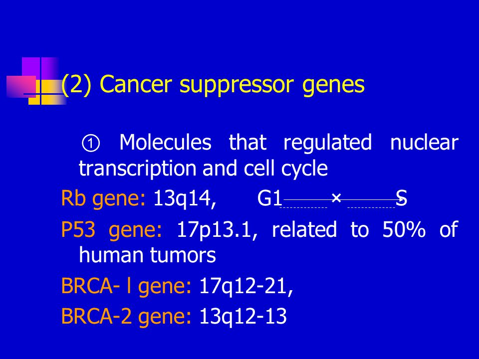 (2) Cancer suppressor genes ① Molecules that regulated nuclear transcription and cell cycle Rb gene: 13q14, G1 × S P53 gene: 17p13.1, related to 50% o