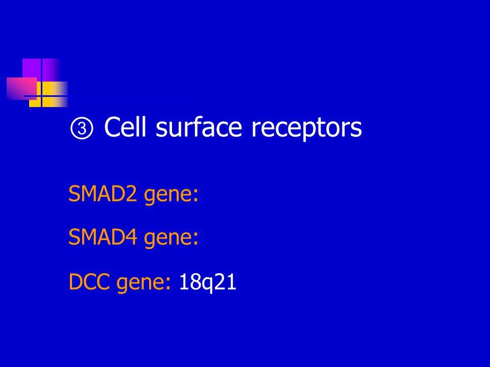 ③ Cell surface receptors SMAD2 gene: SMAD4 gene: DCC gene: 18q21