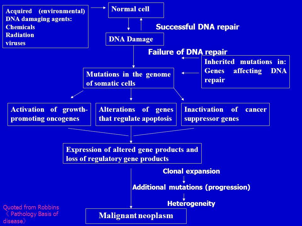 几种常见的癌基因及其激活方式和相关的人类肿瘤 编码的蛋白质 原癌基因 激活机制 相关人类肿瘤 生长因子: PDGF-β 链 sis 过度表达 星形细胞瘤、骨肉瘤 FGF HST-1 过度表达 胃癌 INT-2 扩增 膀胱癌、乳腺癌、黑色素瘤 TGF-α TGF-α 过度表达 星形细胞瘤、肝细胞癌 HGF HGF 过度表达 甲状腺癌 生长因子受体: EGF 受体家族 erb-B1 ( ECFR ) 过度表达 肺鳞癌、神经胶质瘤 erb-B2 扩增 乳腺癌、卵巢癌 CSF-1 受体 FMS 点突变 白血病 神经营养因子受体 RET 点突变 多发性内分泌瘤病 2A 和 B , 家族性甲状腺髓样癌 PDGF 受体 PDGF-R 过度表达 神经胶质瘤 干细胞因子受体 KIT 点突变 胃肠间质细胞瘤、其它软组织肿瘤 信号转导蛋白: GTP 结合蛋白 K-RAS 点突变 结肠、肺、胰腺肿瘤 H-RAS 点突变 膀胱与肾肿瘤 N-RAS 点突变 黑色素瘤、多种造血系统恶性肿瘤 非受体酪氨酸激酶 ABL 易位 慢性髓性白血病、急性淋巴母细胞性白血病 RAS 信号转导 BRAF 点突变 黑色素瘤 WNT 信号转导 β-catenin 点突变 过度表达 肝母细胞瘤、肝细胞癌 核调节蛋白: 转录激活蛋白 C-MYC 易位 伯基特淋巴瘤 N-MYC 扩增 神经母细胞瘤、小细胞肺癌 L-MYC 扩增 小细胞肺癌 细胞周期调节素: 细胞周期素 Cyclin D 易位 套细胞淋巴瘤 扩增 乳腺癌、食管癌 Cyclin E 过度表达 乳腺癌 周期素依赖激酶 CDK4 扩增或点突变 胶质母细胞瘤、黑色素瘤、肉瘤 ( 引自 Robbin Pathologic Basis of Disease,2005)