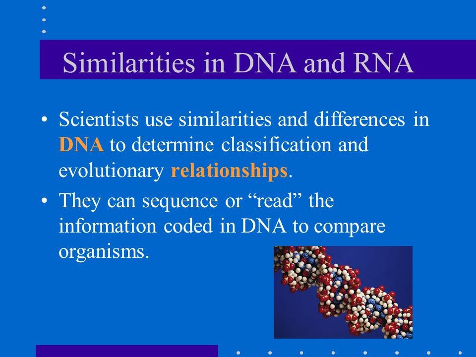 Similarities in DNA and RNA Scientists use similarities and differences in DNA to determine classification and evolutionary relationships.