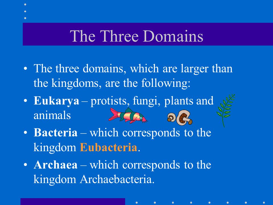 The Three Domains The three domains, which are larger than the kingdoms, are the following: Eukarya – protists, fungi, plants and animals Bacteria – which corresponds to the kingdom Eubacteria.