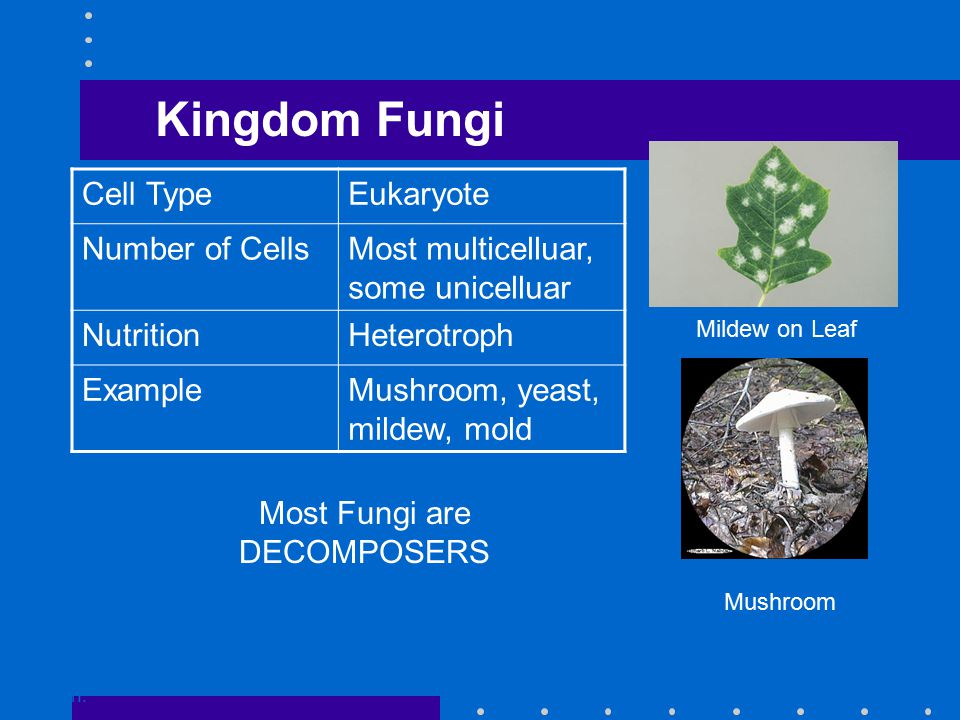 Kingdom Fungi Go to Section: Mildew on Leaf Mushroom Cell TypeEukaryote Number of CellsMost multicelluar, some unicelluar NutritionHeterotroph ExampleMushroom, yeast, mildew, mold Most Fungi are DECOMPOSERS