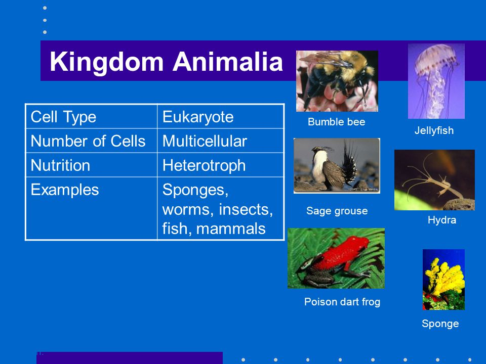 Kingdom Animalia Go to Section: Sage grouse Poison dart frog Bumble bee Sponge Jellyfish Hydra Cell TypeEukaryote Number of CellsMulticellular NutritionHeterotroph ExamplesSponges, worms, insects, fish, mammals