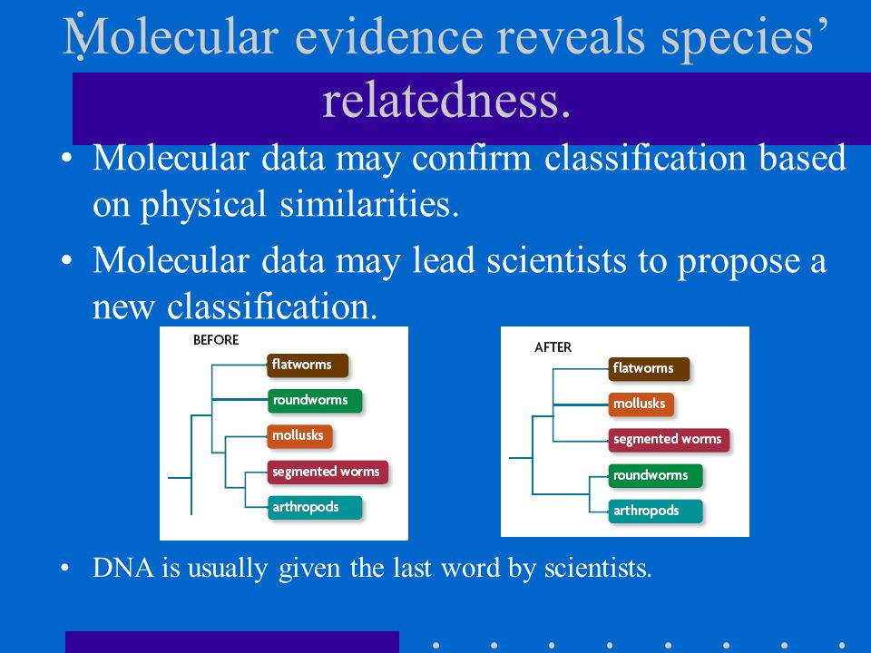 Molecular data may confirm classification based on physical similarities.