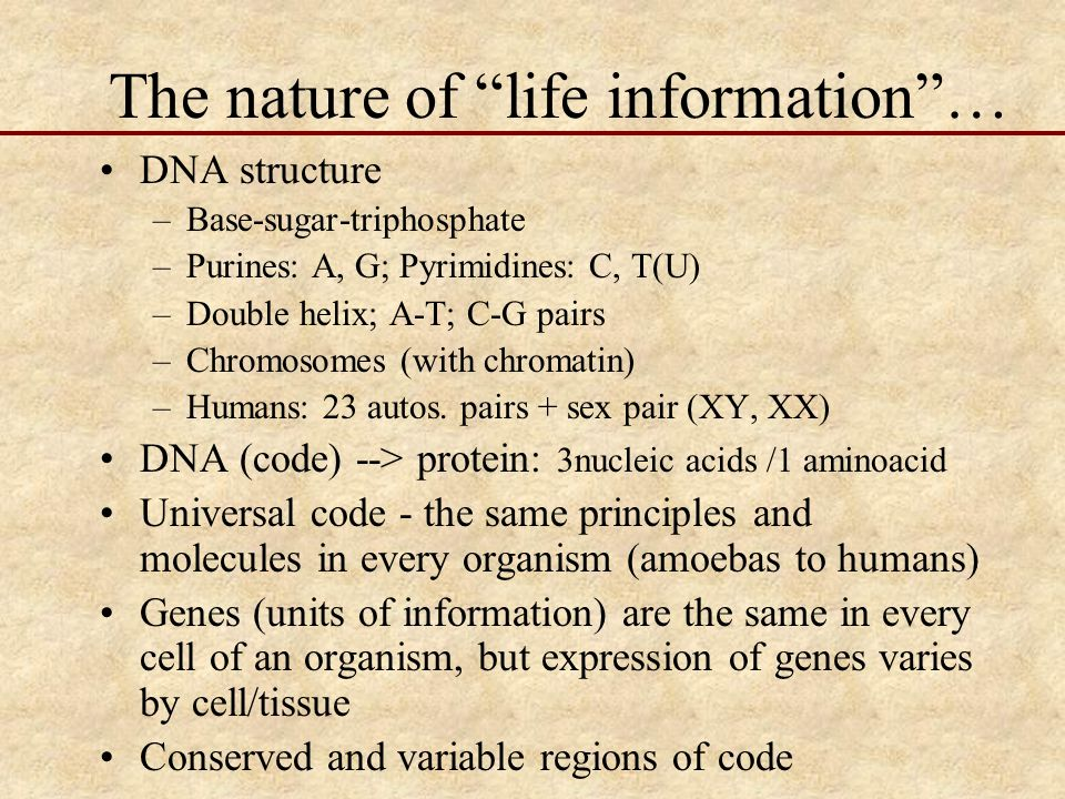 The nature of life information … DNA structure –Base-sugar-triphosphate –Purines: A, G; Pyrimidines: C, T(U) –Double helix; A-T; C-G pairs –Chromosomes (with chromatin) –Humans: 23 autos.