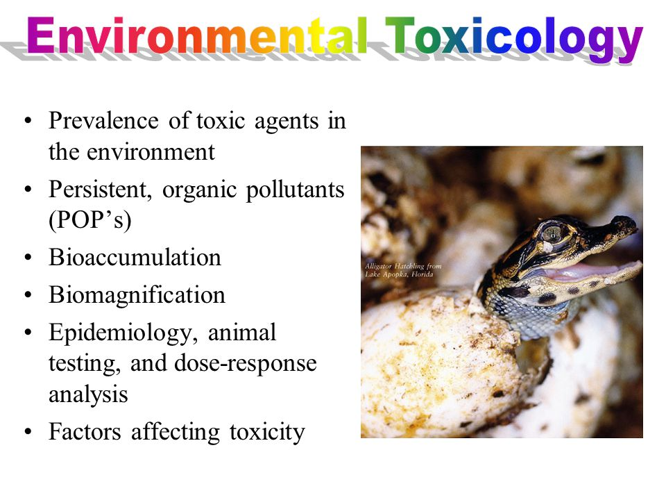 Prevalence of toxic agents in the environment Persistent, organic pollutants (POP's) Bioaccumulation Biomagnification Epidemiology, animal testing, and dose-response analysis Factors affecting toxicity