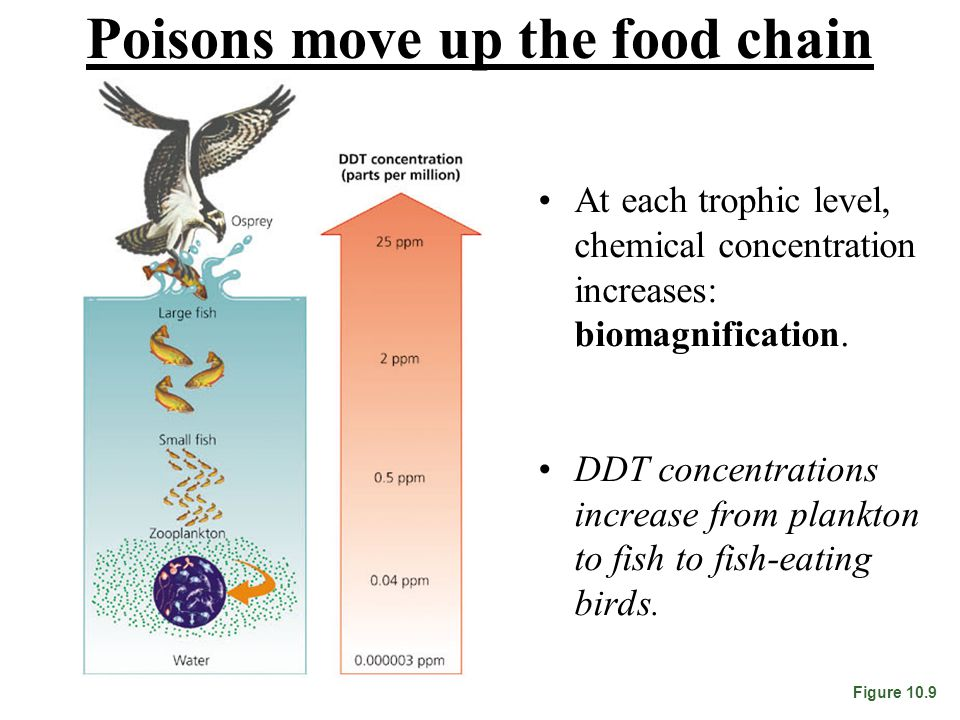Poisons move up the food chain At each trophic level, chemical concentration increases: biomagnification.