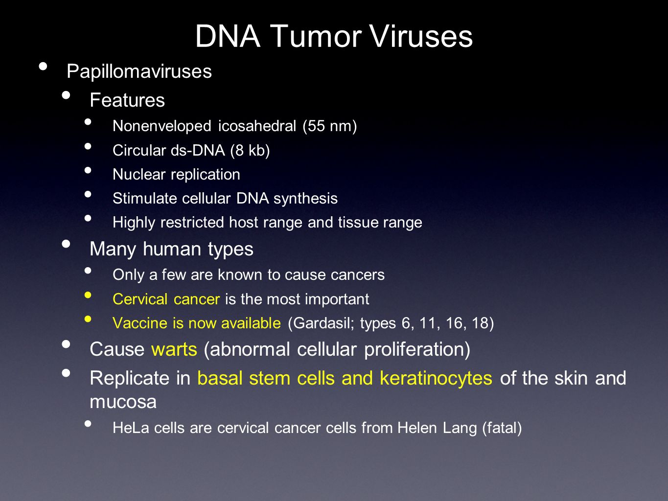 DNA Tumor Viruses Papillomaviruses Features Nonenveloped icosahedral (55 nm) Circular ds-DNA (8 kb) Nuclear replication Stimulate cellular DNA synthes