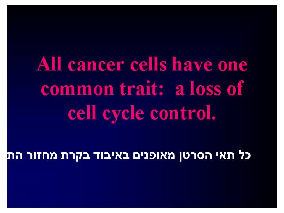 כל תאי הסרטן מאופנים באיבוד בקרת מחזור התא