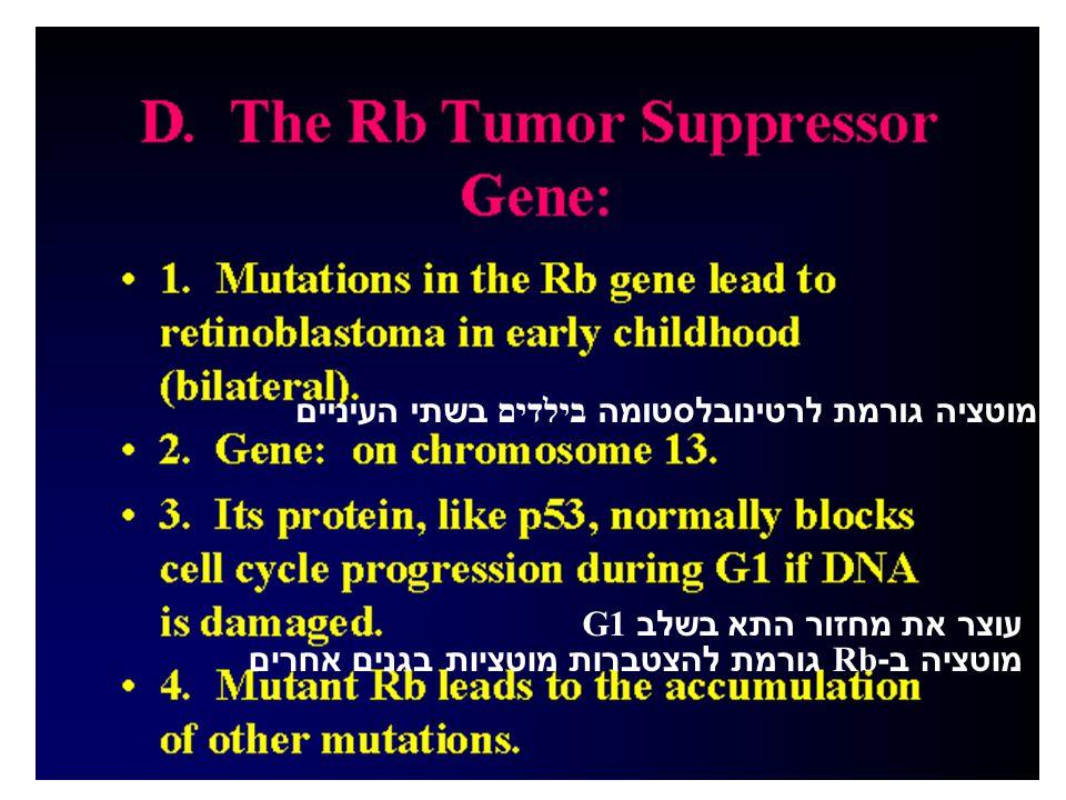 מוטציה גורמת לרטינובלסטומה בילדים בשתי העיניים עוצר את מחזור התא בשלב G1 מוטציה ב-Rb גורמת להצטברות מוטציות בגנים אחרים