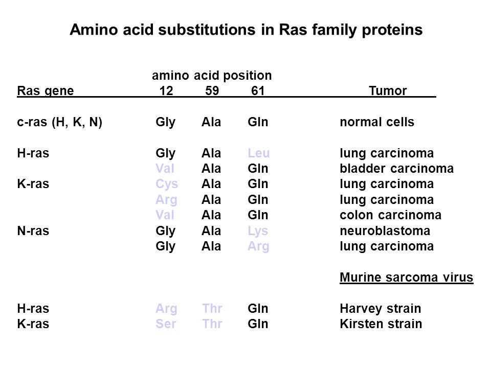 amino acid position Ras gene 12 59 61 Tumor c-ras (H, K, N)GlyAlaGlnnormal cells H-rasGlyAlaLeulung carcinoma ValAlaGlnbladder carcinoma K-rasCysAlaGlnlung carcinoma ArgAlaGlnlung carcinoma ValAlaGlncolon carcinoma N-rasGlyAlaLysneuroblastoma GlyAlaArglung carcinoma Murine sarcoma virus H-rasArgThrGlnHarvey strain K-rasSerThrGlnKirsten strain Amino acid substitutions in Ras family proteins