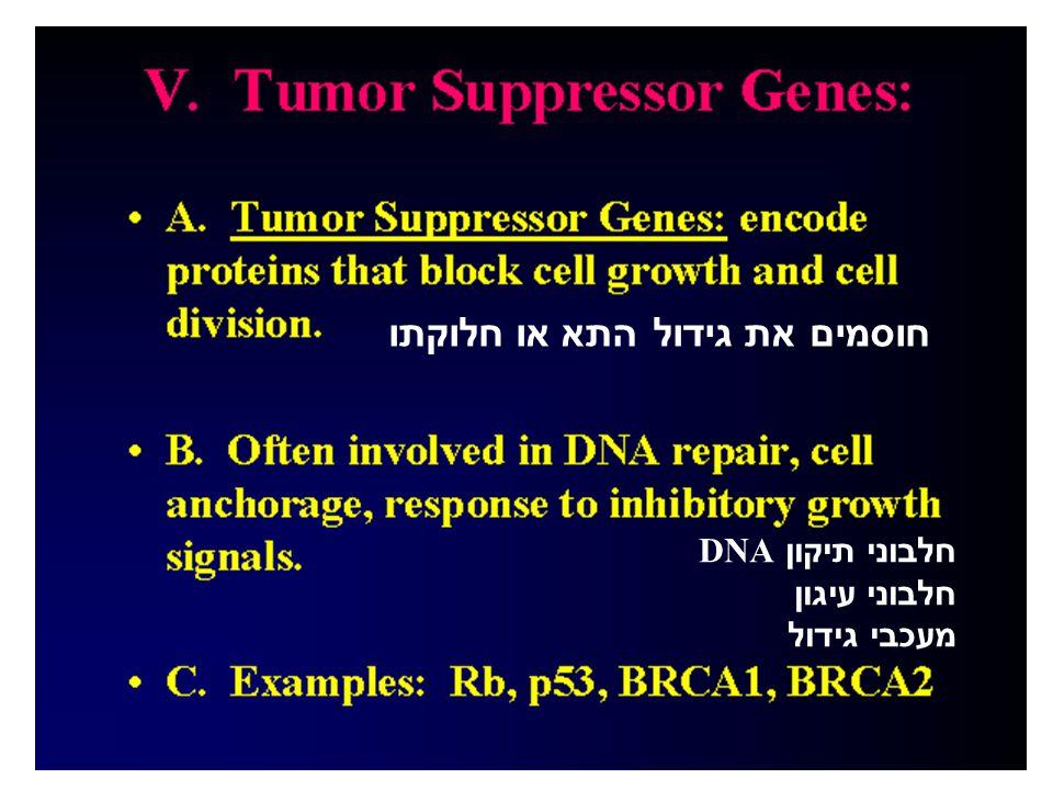 חוסמים את גידול התא או חלוקתו חלבוני תיקון DNA חלבוני עיגון מעכבי גידול