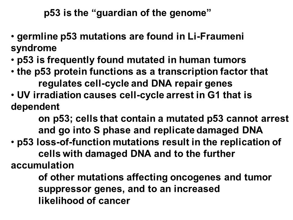 p53 is the guardian of the genome germline p53 mutations are found in Li-Fraumeni syndrome p53 is frequently found mutated in human tumors the p53 protein functions as a transcription factor that regulates cell-cycle and DNA repair genes UV irradiation causes cell-cycle arrest in G1 that is dependent on p53; cells that contain a mutated p53 cannot arrest and go into S phase and replicate damaged DNA p53 loss-of-function mutations result in the replication of cells with damaged DNA and to the further accumulation of other mutations affecting oncogenes and tumor suppressor genes, and to an increased likelihood of cancer
