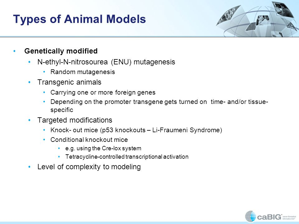 Types of Animal Models Genetically modified N-ethyl-N-nitrosourea (ENU) mutagenesis Random mutagenesis Transgenic animals Carrying one or more foreign genes Depending on the promoter transgene gets turned on time- and/or tissue- specific Targeted modifications Knock- out mice (p53 knockouts – Li-Fraumeni Syndrome) Conditional knockout mice e.g.