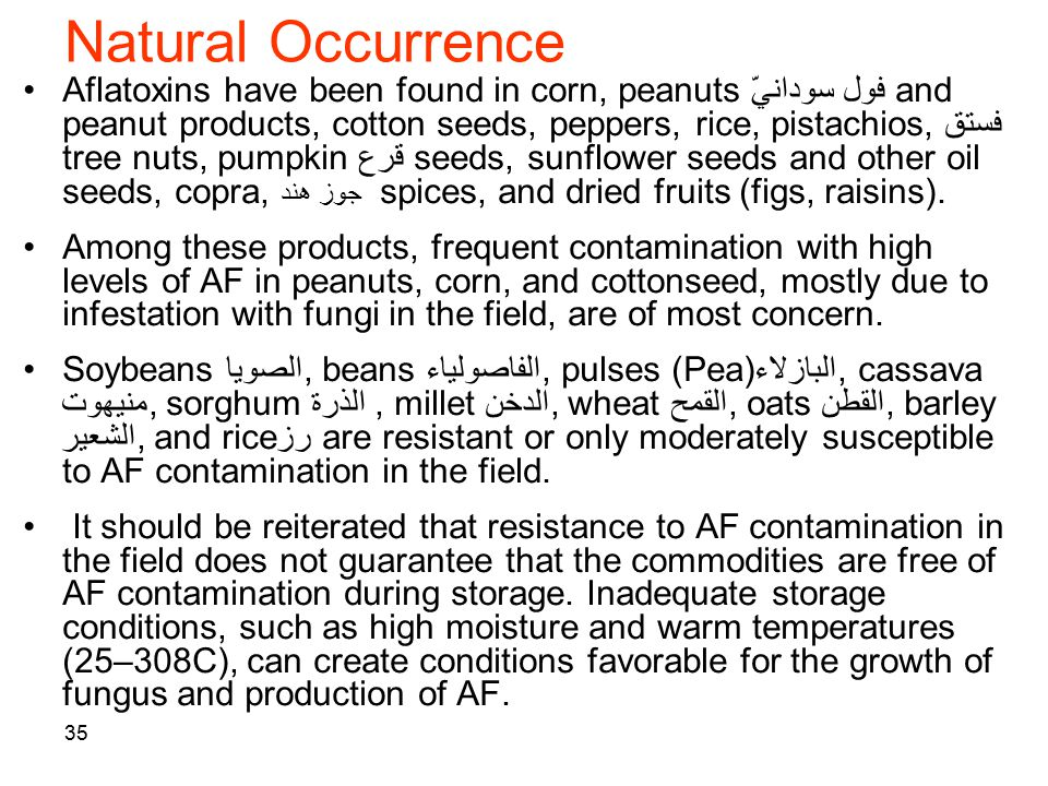 35 Natural Occurrence Aflatoxins have been found in corn, peanuts فول سودانيّ and peanut products, cotton seeds, peppers, rice, pistachios, فستق tree