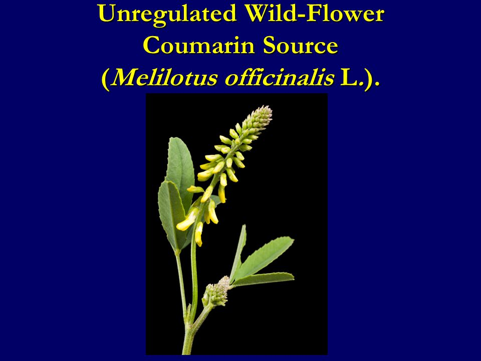 Unregulated Wild-Flower Coumarin Source (Melilotus officinalis L.).