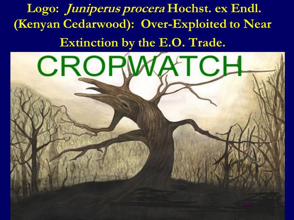 Logo: Juniperus procera Hochst. ex Endl.