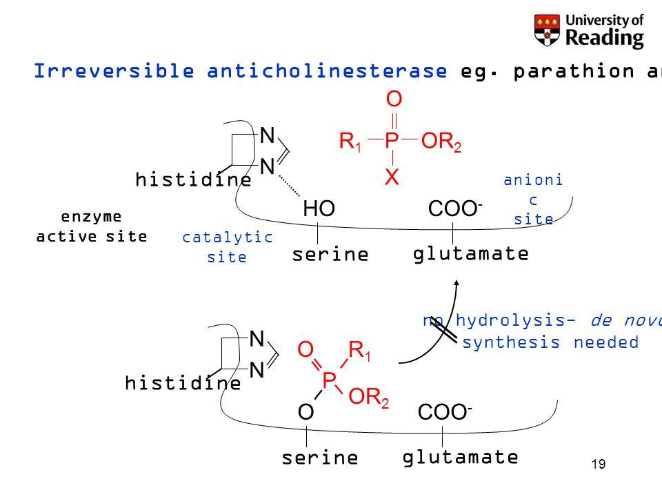 19 Irreversible anticholinesterase eg. parathion and sarin POR 2 R 1 X O N N serine O glutamate COO - histidine O P OR 2 R1R1 N N serine HO glutamate