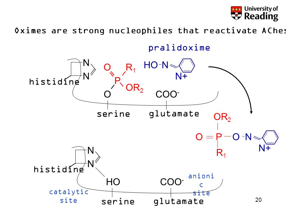20 Oximes are strong nucleophiles that reactivate AChesterase N N serine O glutamate COO - histidine O P OR 2 R1R1 HON N+ ON P OR 2 R 1 O pralidoxime N N serine HO glutamate COO - histidine catalytic site anioni c site